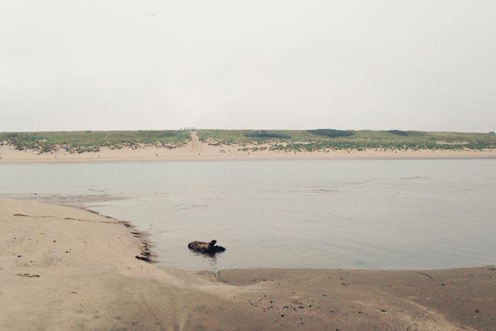 Hardlopen op de Tweede Maasvlakte