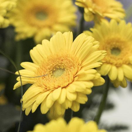 Keukenhof; Een dagje tussen de bloemen