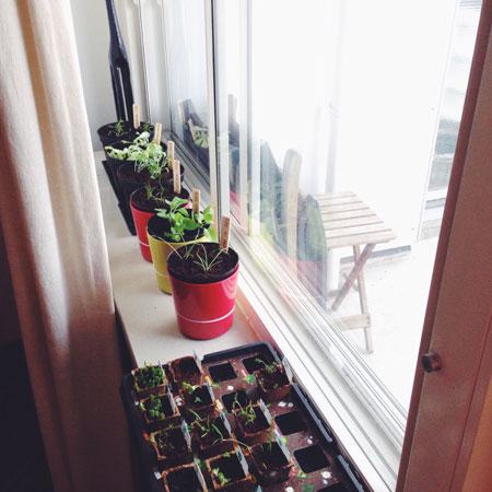 Moestuin op het balkon; Tweede poging