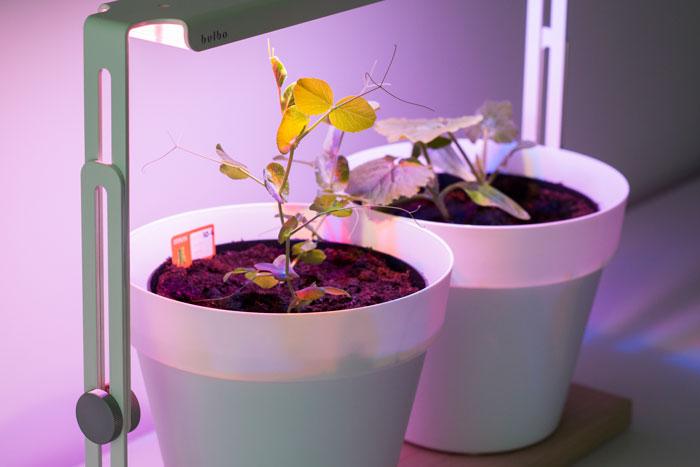 Kruiden en groenten kweken zonder natuurlijk zonlicht
