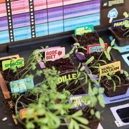 Moestuin; groente en fruit kweken op je balkon